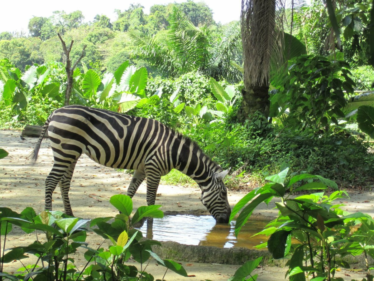 Фото Сингапурского зоопарка