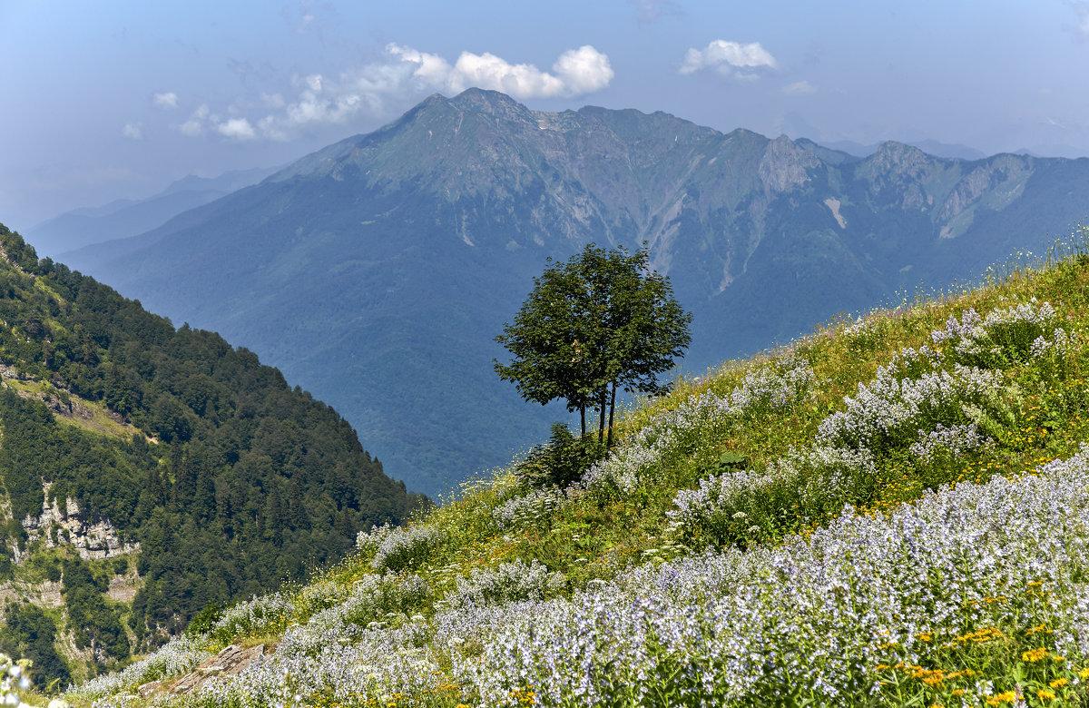 Фото альпийских лугов