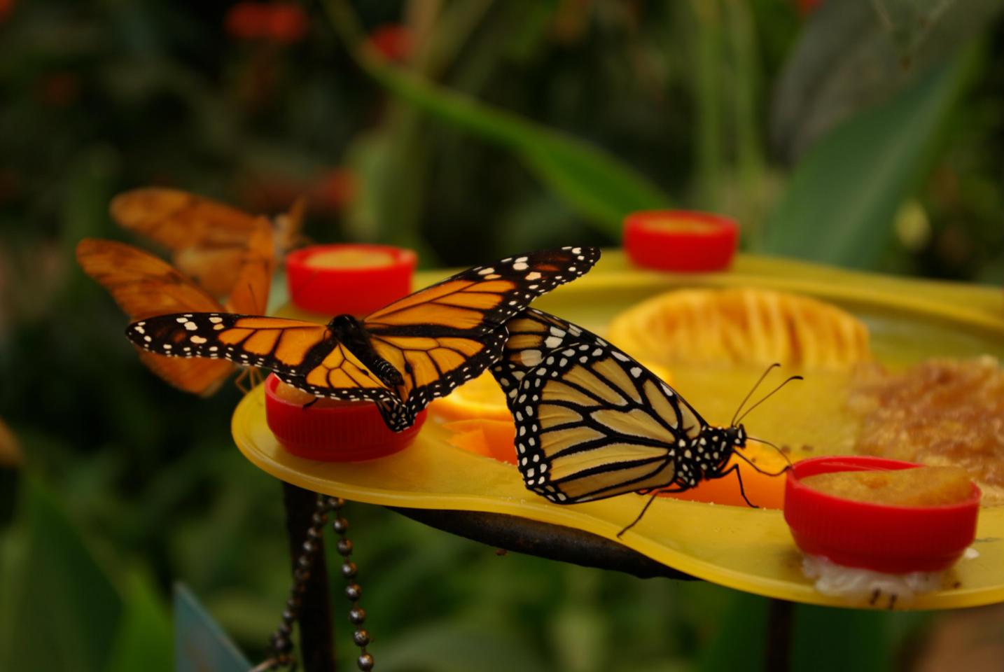 Шикарные бабочки на Сентозе