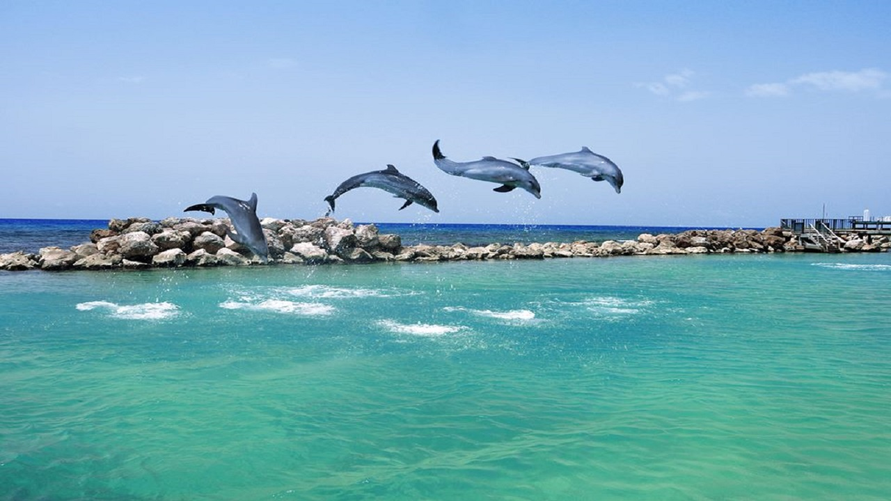 Невероятная лагуна с дельфинами