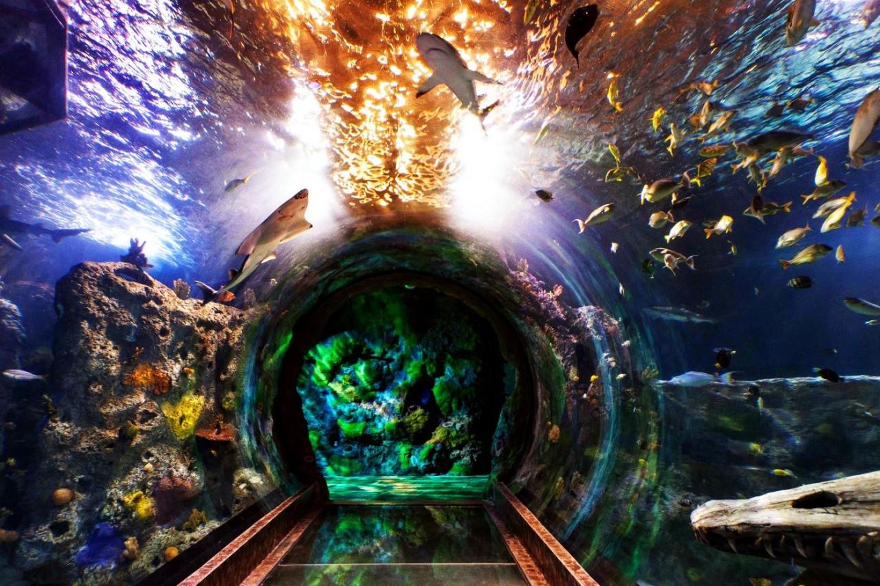 Красочный океанариум в Сингапуре