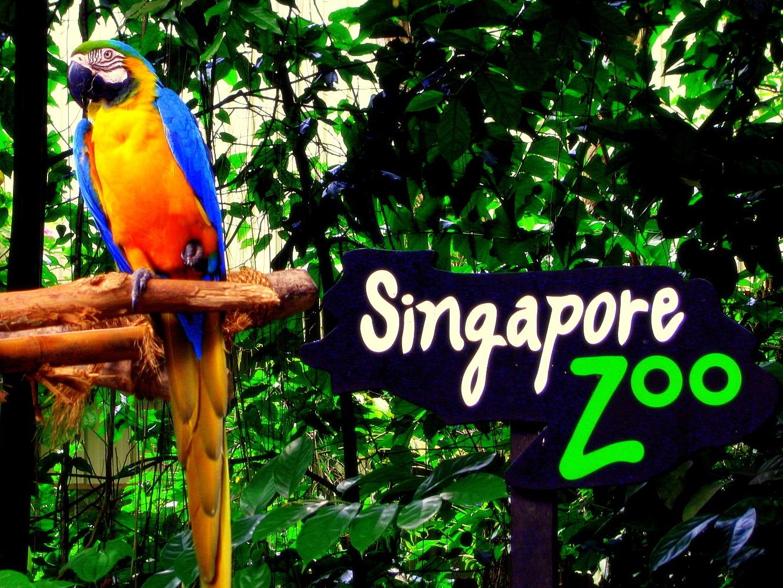 Насыщенный зоопарк Сингапура