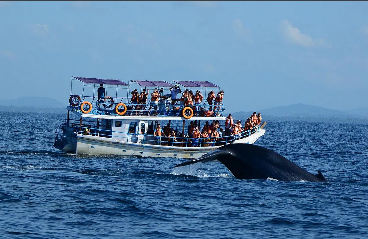 Необычное китовое сафари