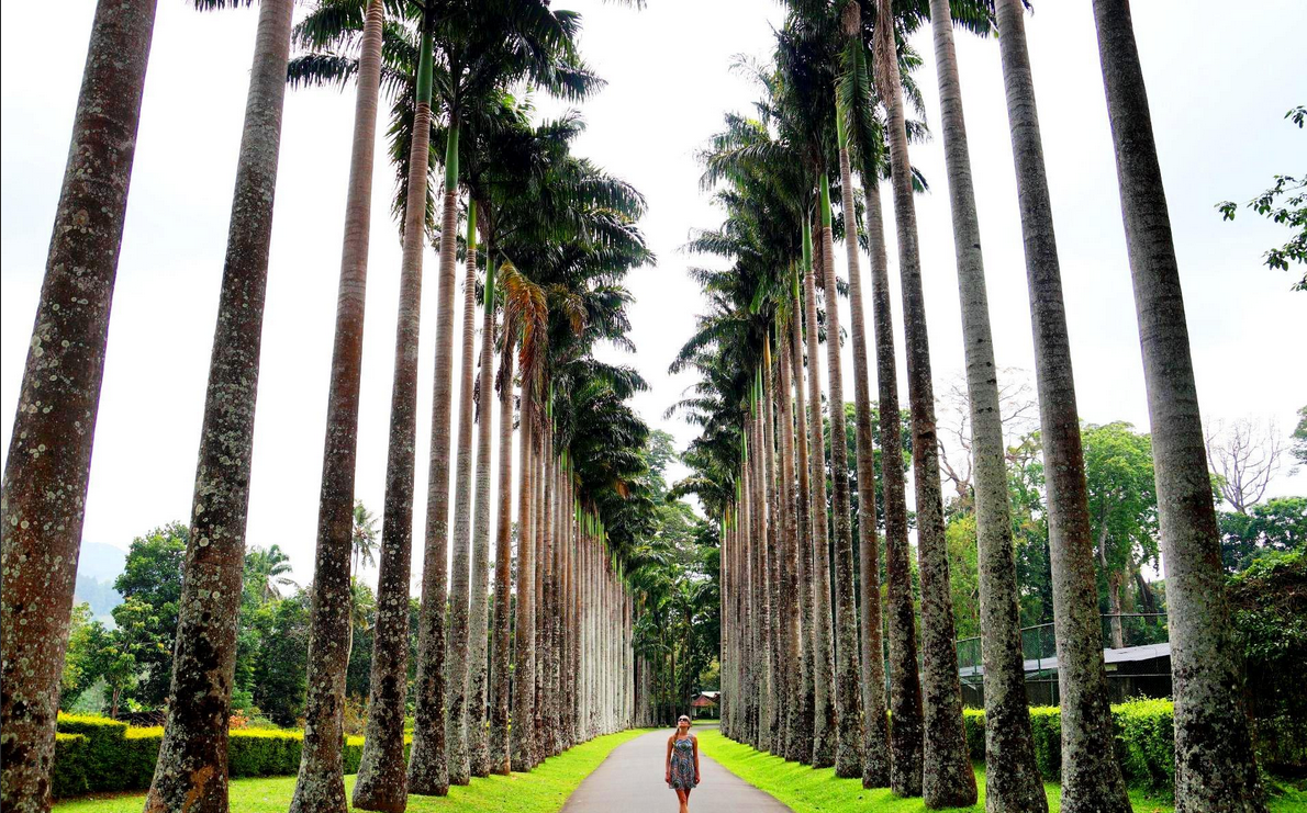 Красивый ботанический сад Перадения