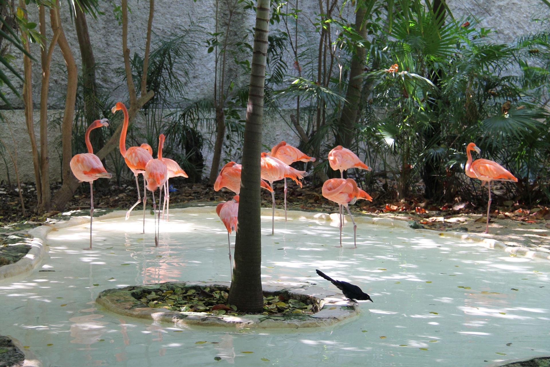 Национальный парк в Мексике
