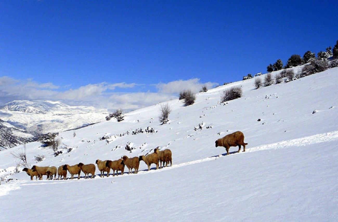 Зима в Марокко