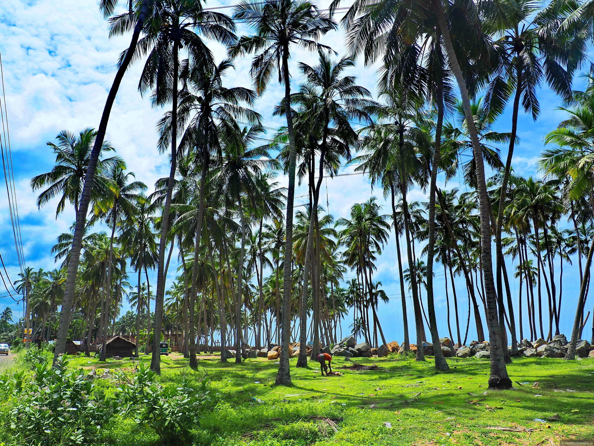 Фото весенней Шри-Ланки