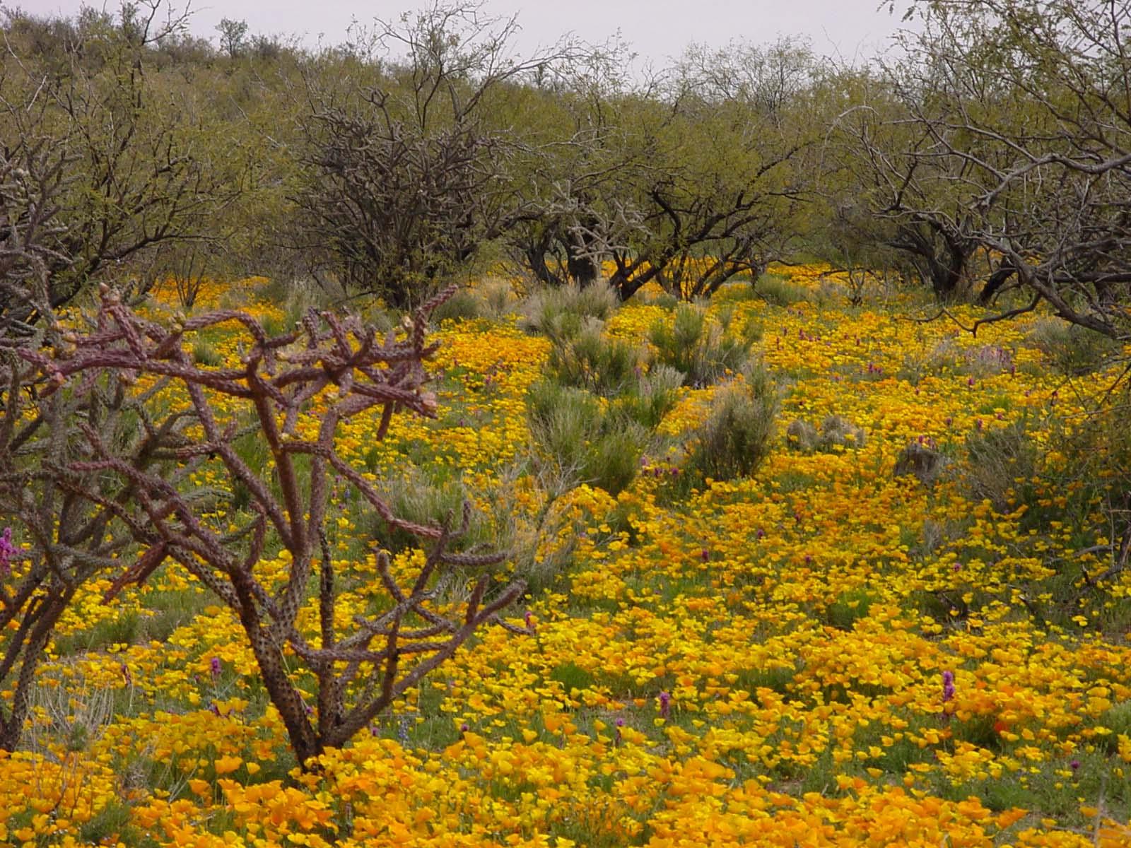 Фото Мексики весной