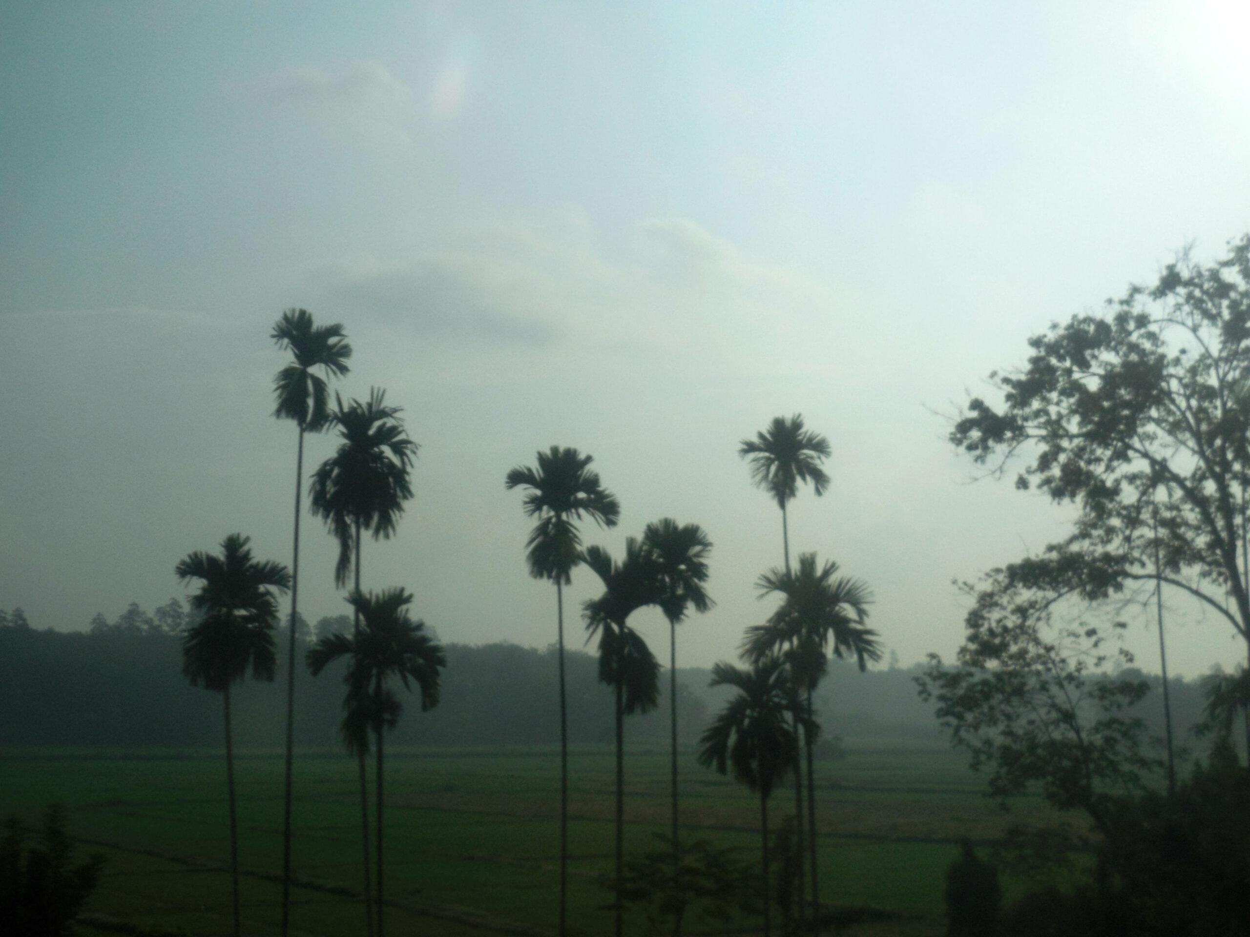 Фото летней Шри-Ланки